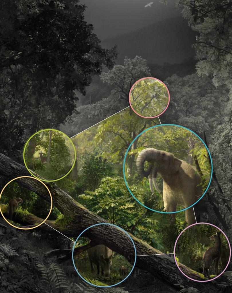 Cuadro de texto: Reconstrucción paleoambiental de la red que formaba la extinta comunidad de mamíferos en el yacimiento paleontológico de Hostalets de Pierola (España), datado en torno hace 12 millones de años. / Arte por Oscar Sanisidro (Universidad de Alcalá).
